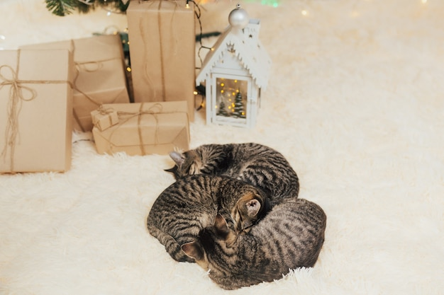 Os gatinhos estão em uma manta de pele bege ao lado de caixas de presente.
