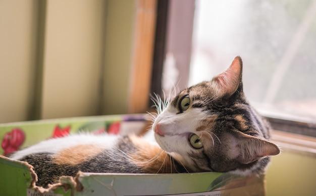 Os gatos na caixa estão muito bonitos.