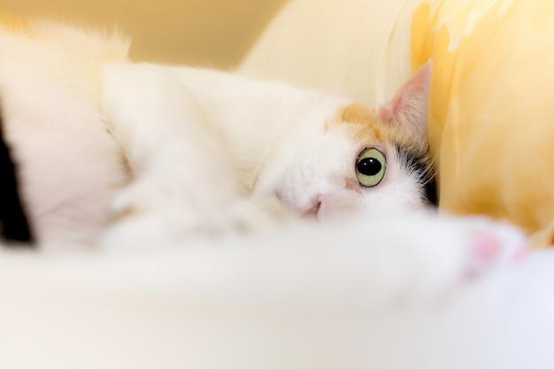 Os gatos olham para a câmera pelo pânico.