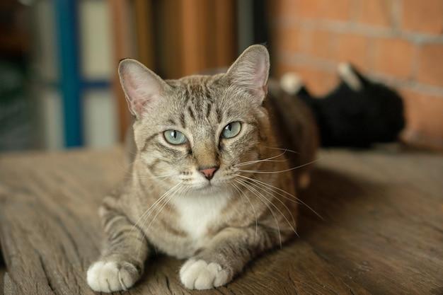 Os gatos parecem muito fofos desse jeito.