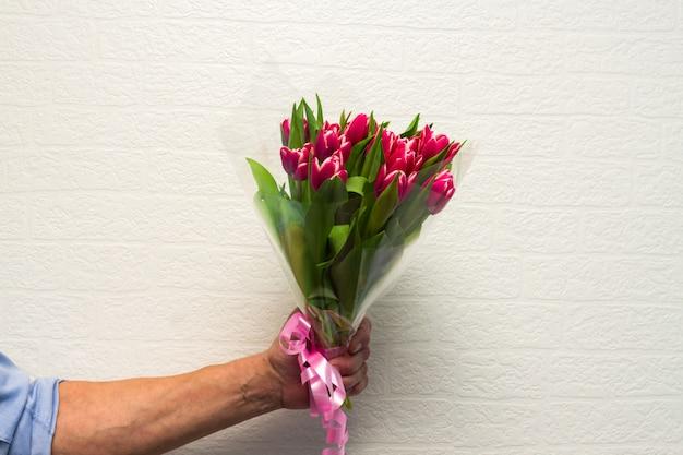 Os homens mão com buquê de tulipas cor de rosa na parede branca. primavera.