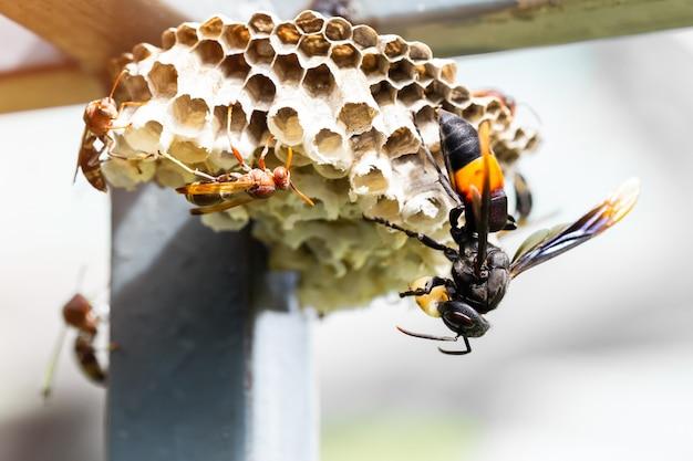 Os insetos se alimentam das larvas do inseto.