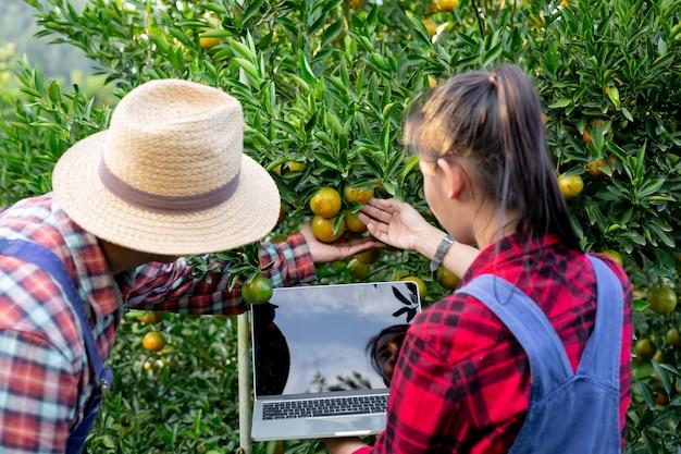Os jovens agricultores estão coletando laranja