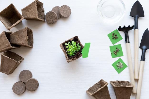 Os jovens brotam a planta verde no pote de turfa. como cultivar alimentos em casa no peitoril da janela. ferramentas para mudas e jardinagem em casa. instruções passo a passo sobre madeira branca. etapa 10 diy