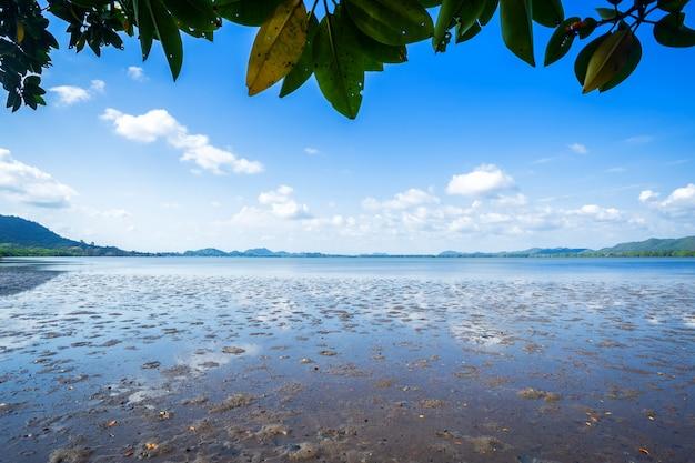 Os manguezais da floresta e o mar o horizonte na província de chon buri, tailândia.