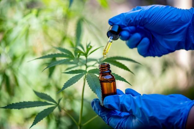 Os médicos seguram uma garrafa de óleo de cânhamo, produtos de maconha para uso médico