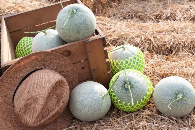 Os melões frescos na palha pronta vão ao mercado do fazendeiro. fruta saudável