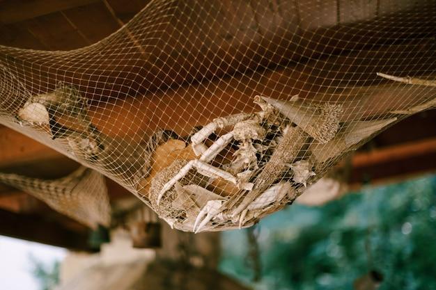 Os membros dos marinheiros caranguejos lagostas mexilhões pendurados na rede sob o teto como decoração
