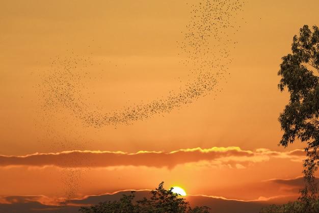 Os morcegos voando contra o sol e o céu dourado podem usar para tema horrível ou tema de halloween