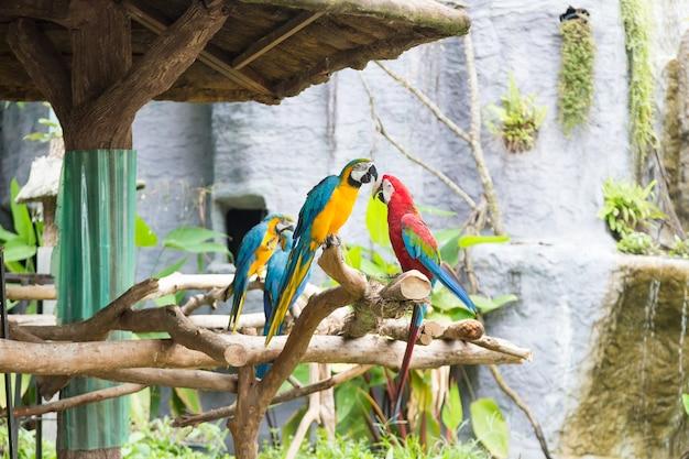 Os papagaios coloridos estão nos ramos.