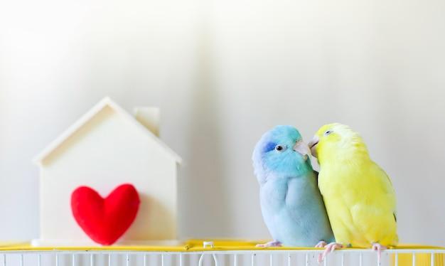 Os pares de papagaio pequeno estão sentando-se junto perto da casa com coração vermelho.