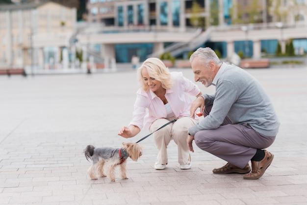 Os pares velhos sentaram para baixo o cão da pancadinha. história de amor de casal.