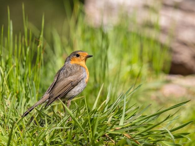 Os passarinhos com suas cores magníficas na primavera