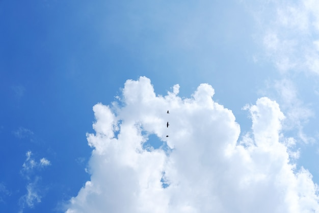 Os pássaros arremessam nas nuvens e no fundo do céu azul. conceito de vida de liberdade
