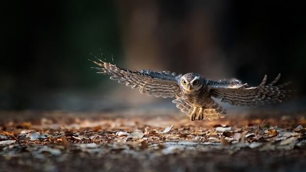 Os pássaros estão voando na natureza perto do chão.