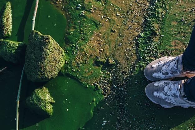 Os pés de fe, ae ficam perto da água esmeralda do rio com pedras e florescências de algas prejudiciais