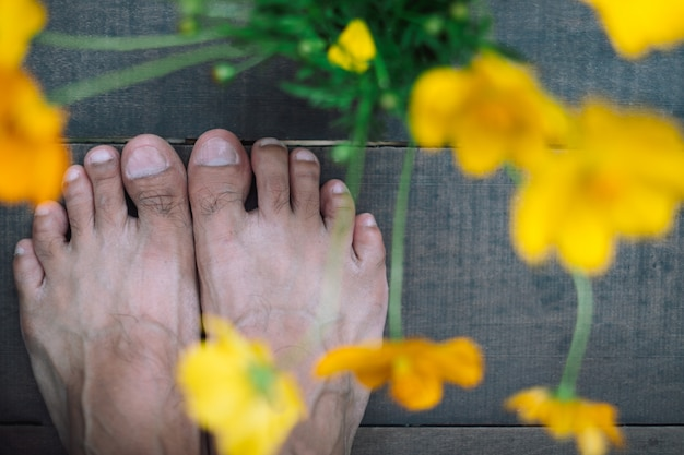 Os pés humanos em pé no chão de madeira fecham a flor amarela do cosmos
