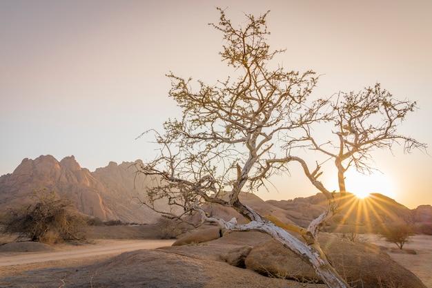 Os pondoks ao nascer do sol perto da montanha spitzkoppe na namíbia na áfrica.