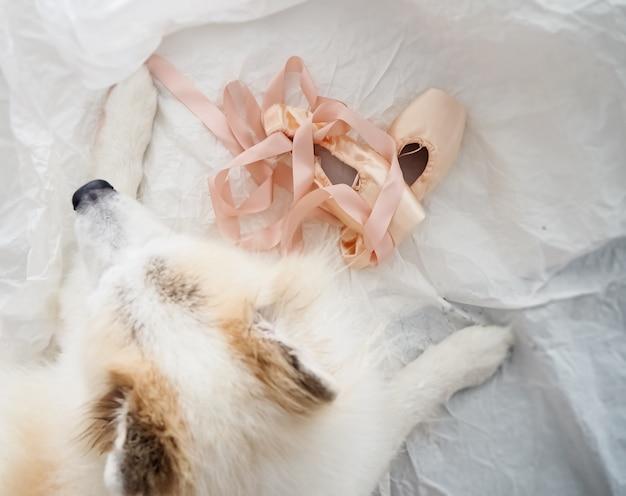 Os sapatos de balé de cetim rosa colocados ao lado de cachorro