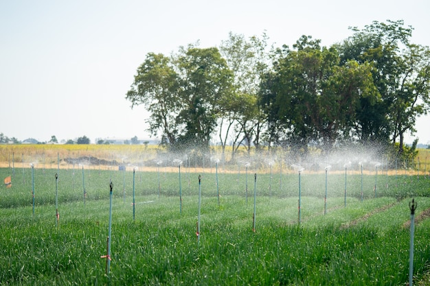 Os sistemas de água dos agricultores spinger ajudam a água a se espalhar bem e economizam tempo de rega para os agricultores.