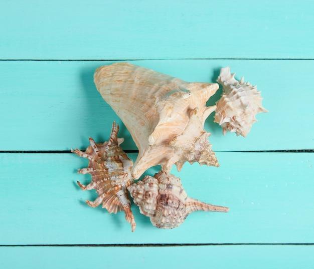 Os tipos diferentes de conchas do mar fecham-se acima na madeira azul. vista do topo