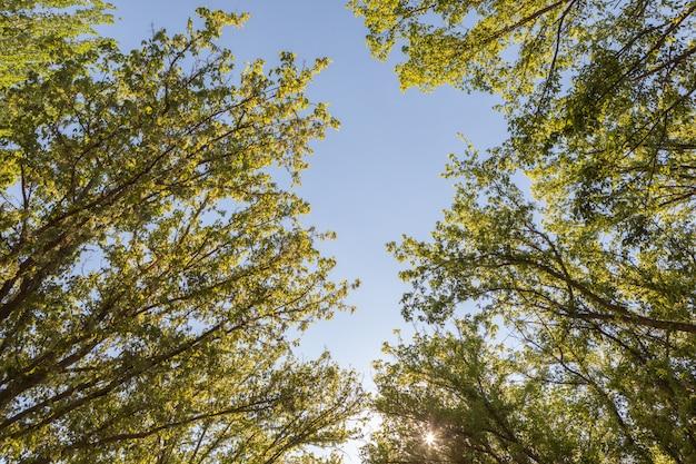 Os topos das árvores