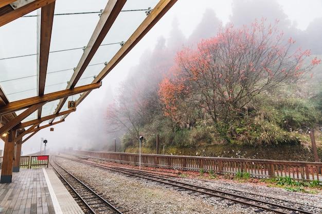 Os trilhos vazios do trem em alishan forest railway param com árvores e névoa.