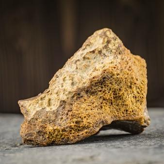 Osso petrificado de um mamute. arqueologia