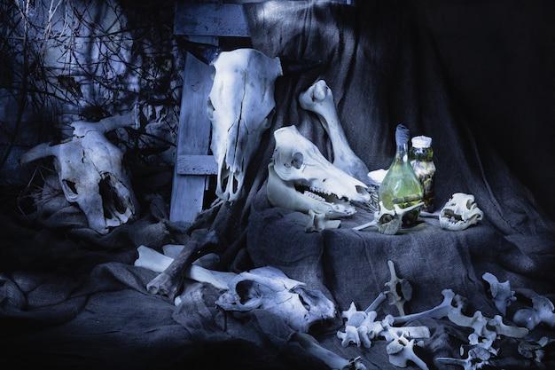 Ossos e crânios de animais. dia das bruxas