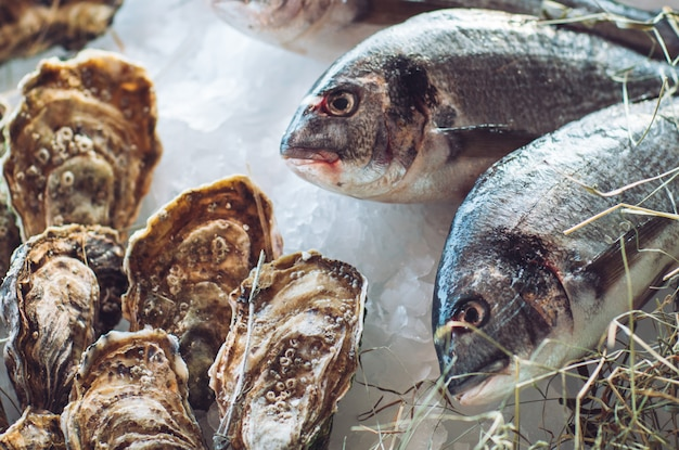 Ostras e outros frutos do mar no gelo.