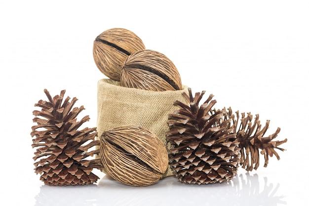 Othalanga - semente de árvore de suicídio e pinha cedro em sacos de forragem