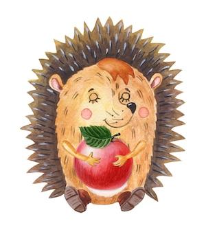 Ouriço-cacheiro em aquarela com maçã vermelha um animal da floresta de desenho animado em um fundo branco outono