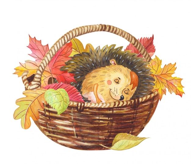 Ouriço-cacheiro em aquarela dormindo em uma cesta com as folhas coloridas de outono.