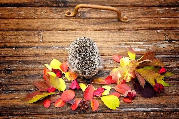 Ouriço em folhas de outono no antigo fundo de madeira retrô vintage