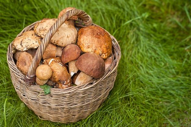Outono ainda vida de cogumelos