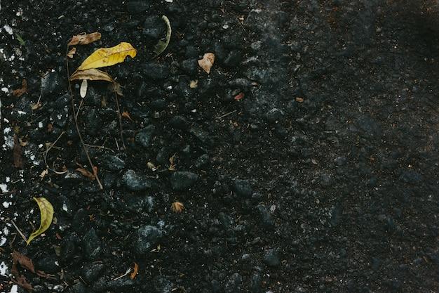 Outono asfalto com folhas pequenas caídas