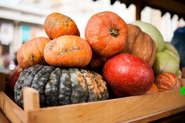 Outono colheita abóboras coloridas e abóboras em diferentes variedades.