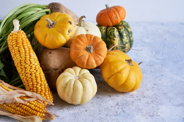 Outono colheita de legumes. abóbora, rabanete, milho