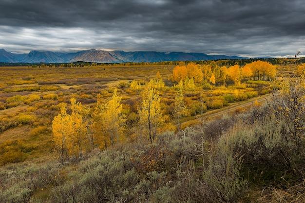 Outono colorido no parque nacional grande de teton.