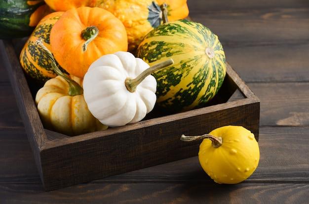 Outono composição de ação de graças com sortidas mini abóboras na bandeja de madeira em uma mesa de madeira