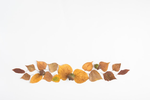 Outono composição de folhas e bolotas