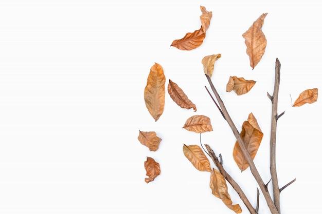 Outono da folha seca marrom no fundo branco.