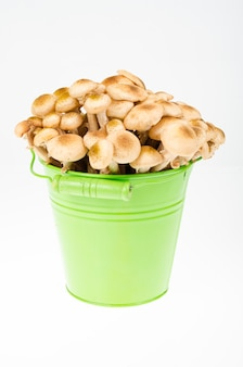 Outono de armillaria mellea de cogumelos em balde. foto do estúdio.