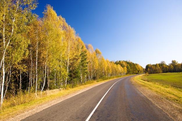 Outono de estrada na floresta