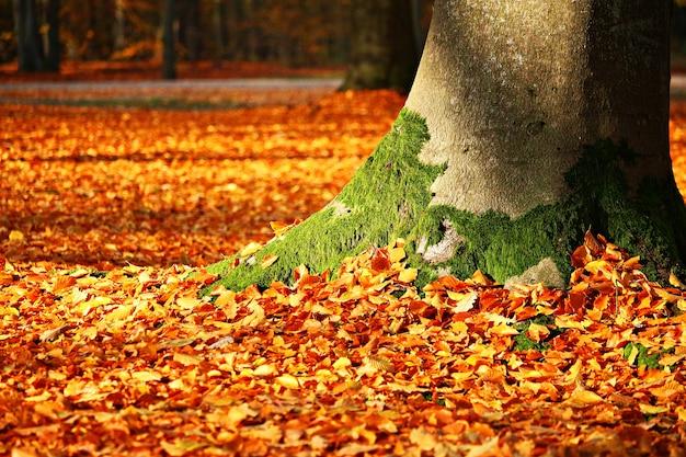 Outono de folhagem de outono