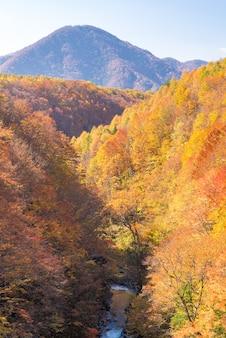Outono de nakatsugawa fukushima