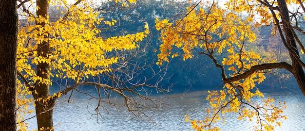 Outono dourado. árvores amarelas à beira do rio em um dia ensolarado
