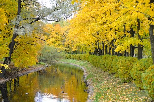Outono dourado em um parque de são petersburgo