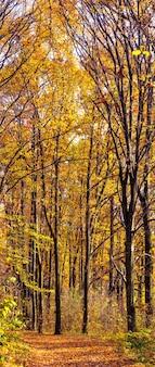 Outono dourado na floresta. árvores amarelas e laranjeiras na floresta