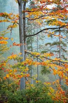 Outono dourado na paisagem da floresta de montanha